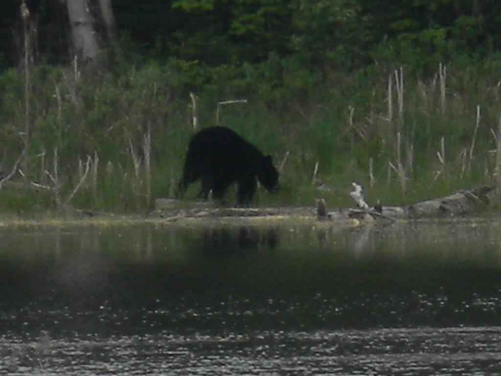 Canada 2011 118