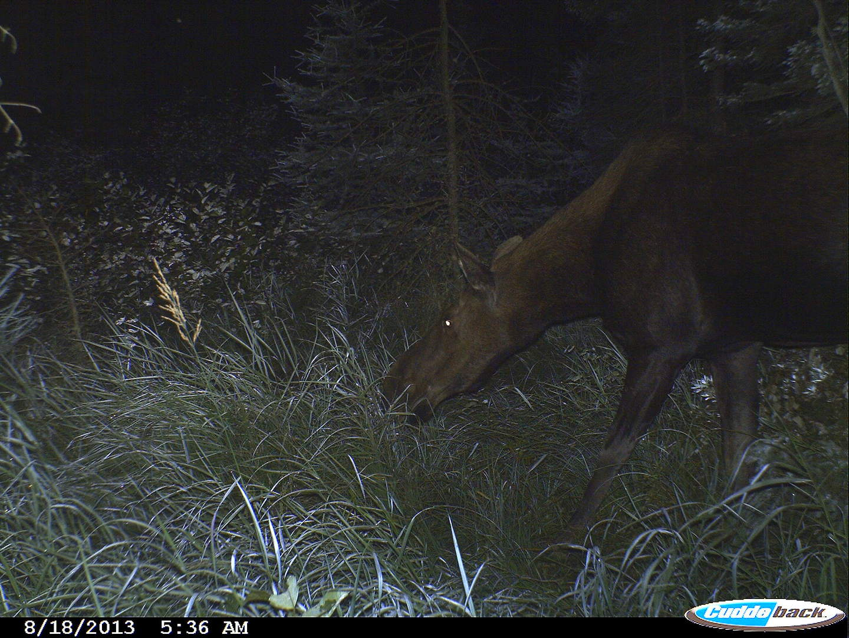 moose 2013 001