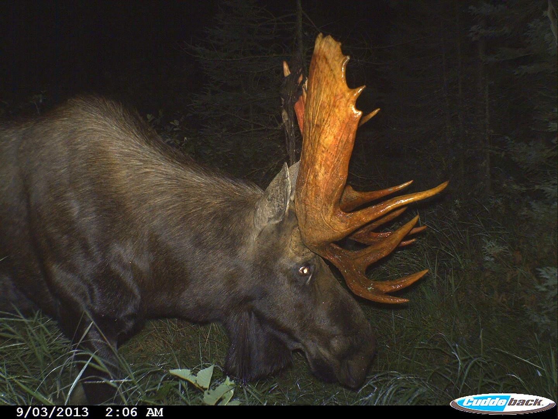 moose 2013 008