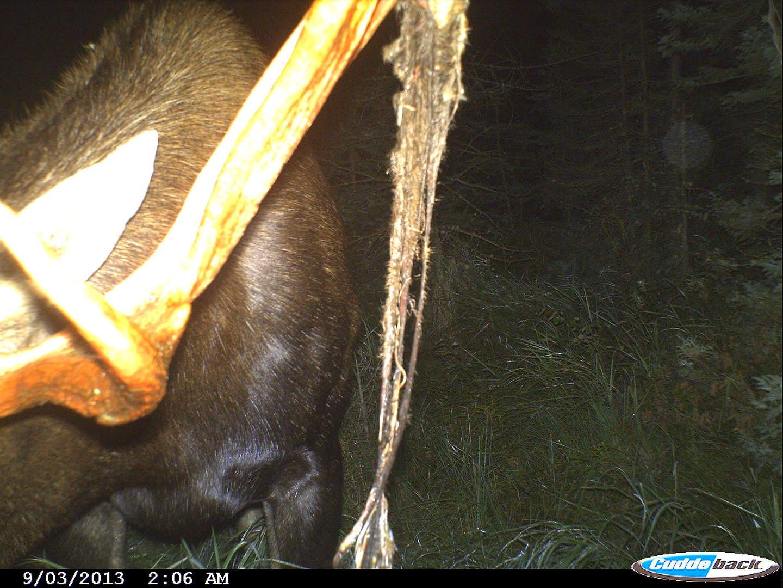 moose 2013 009